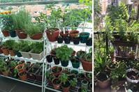 urban-farming-balcony-garden-(1).png